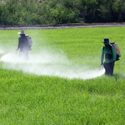 DDT-spraying