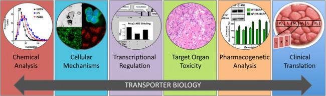TransporterBiology2
